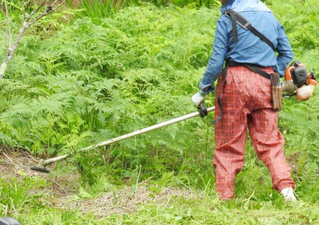 福山市で草刈りにかかる料金相場は?追加料金や業者選びのコツまで解説